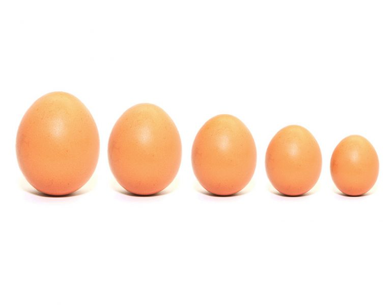 Five Eggs in a row biggest to smalles