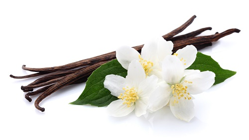 Vanilla Beans and Flowers